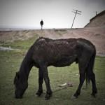 Kraina szczęśliwych koni